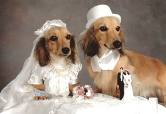 dog-wedding1-1-2